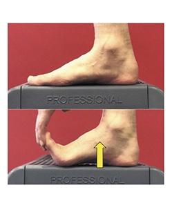 足の指を伸展させることでウィンドラスメカニズムによって足部の剛性が高まり床反力を得やすくなる
